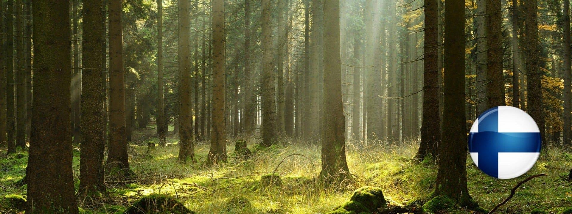 Sukces maszyn Wood-Mizer serii Woodworking na rynku fińskim